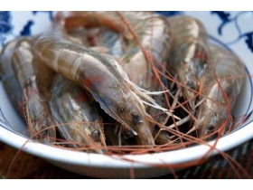 Tiger Prawns Head-on