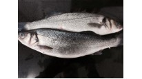 Whole Farmed Sea Bass